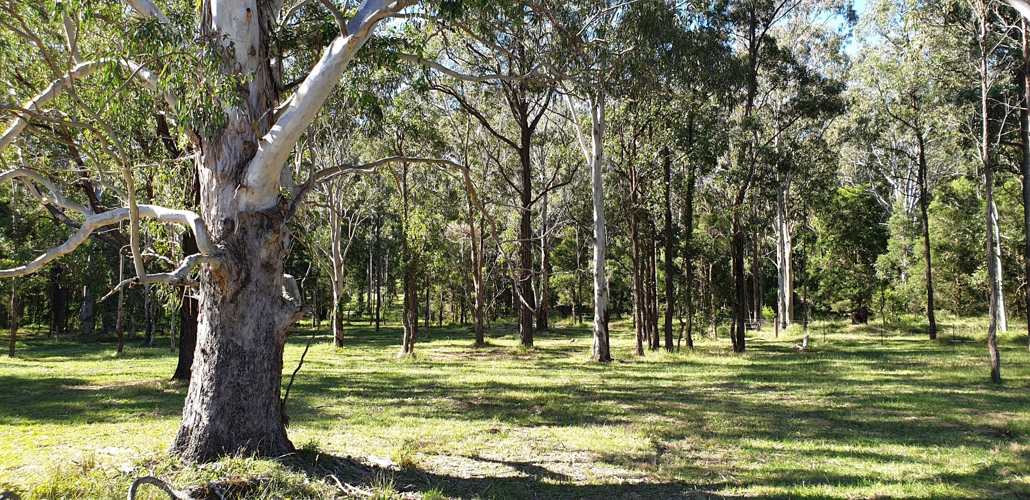 788 Limeburners Creek Road CLARENCE TOWN