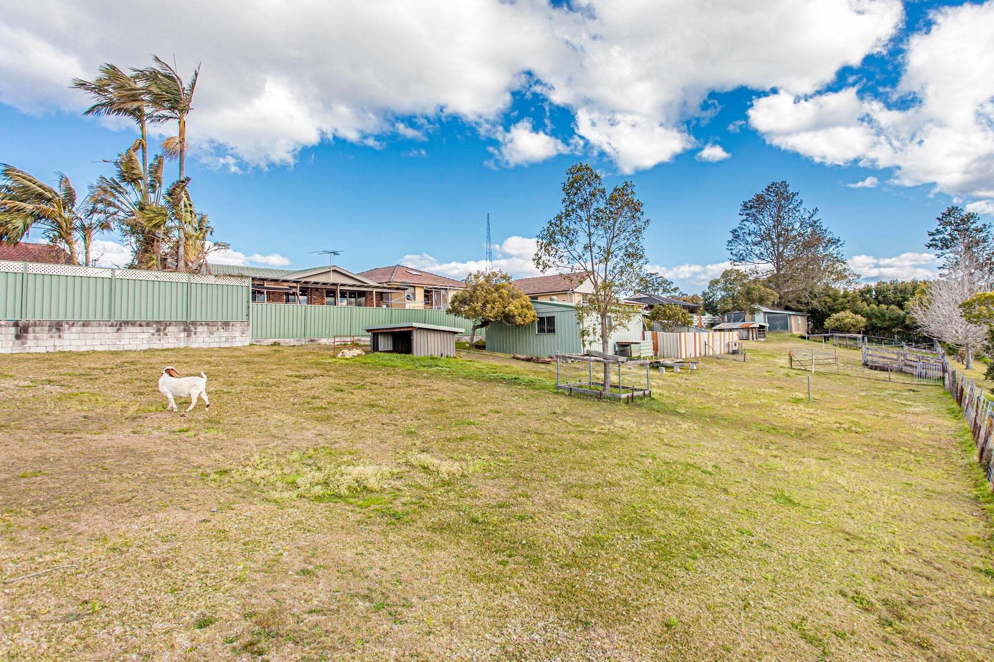 19 Alton Close RAYMOND TERRACE