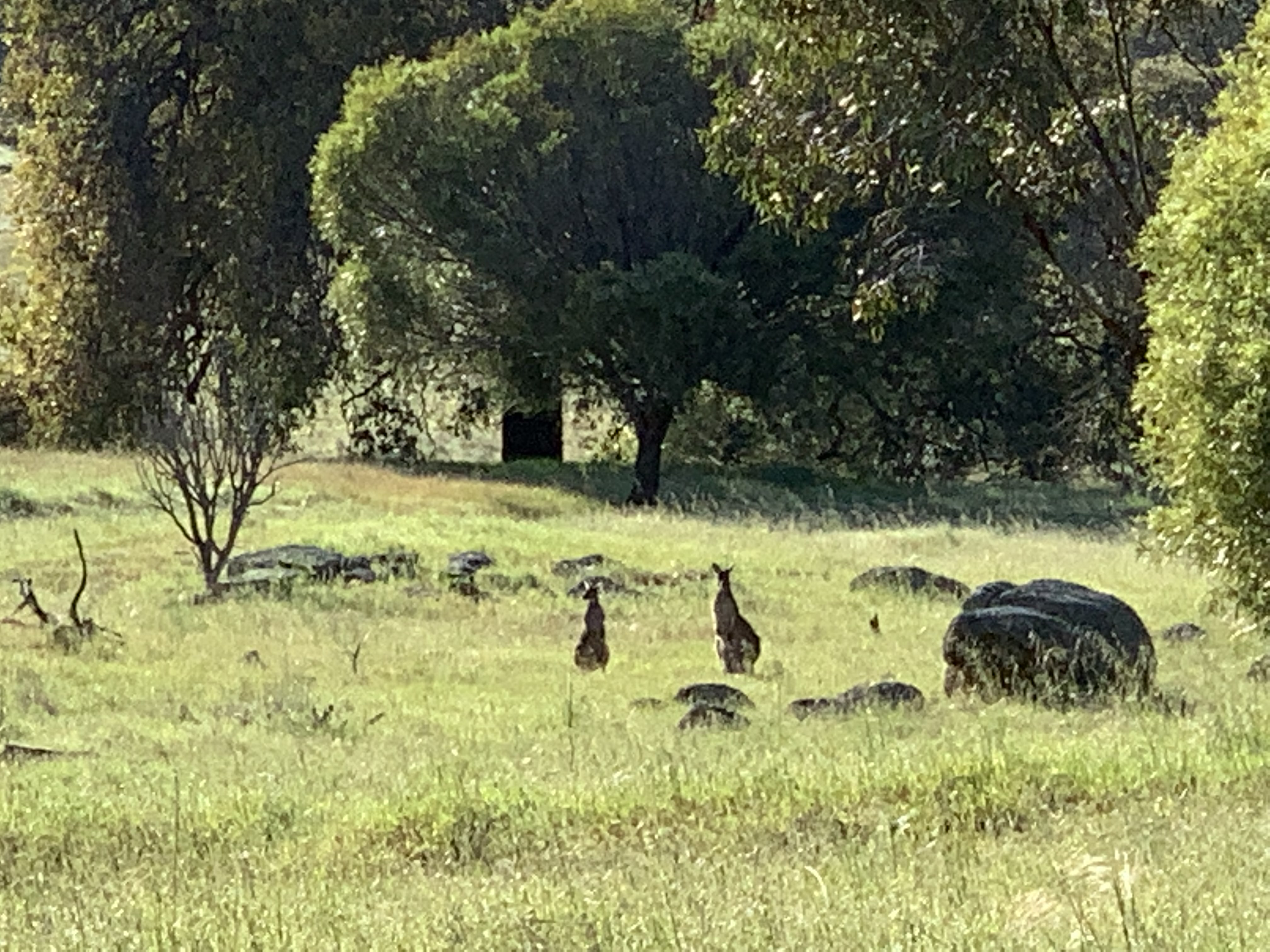 Lot 112 Whitfield Road TOODYAY